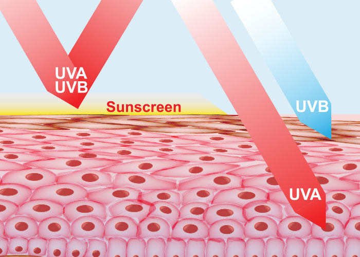 How UVA and UVB Ray Penetration of the Skin is Prevented by Sunscreen